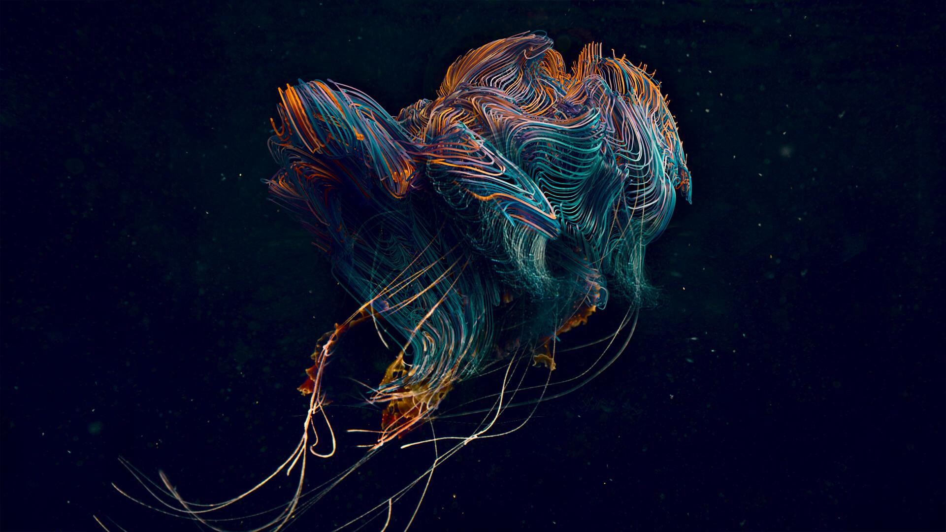 Jellyfish_004